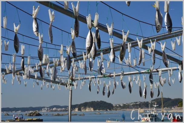 海風が少し冷たい 「湘南海岸」_e0219011_15514778.jpg