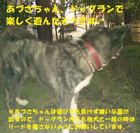 f0121712_14445888.jpg