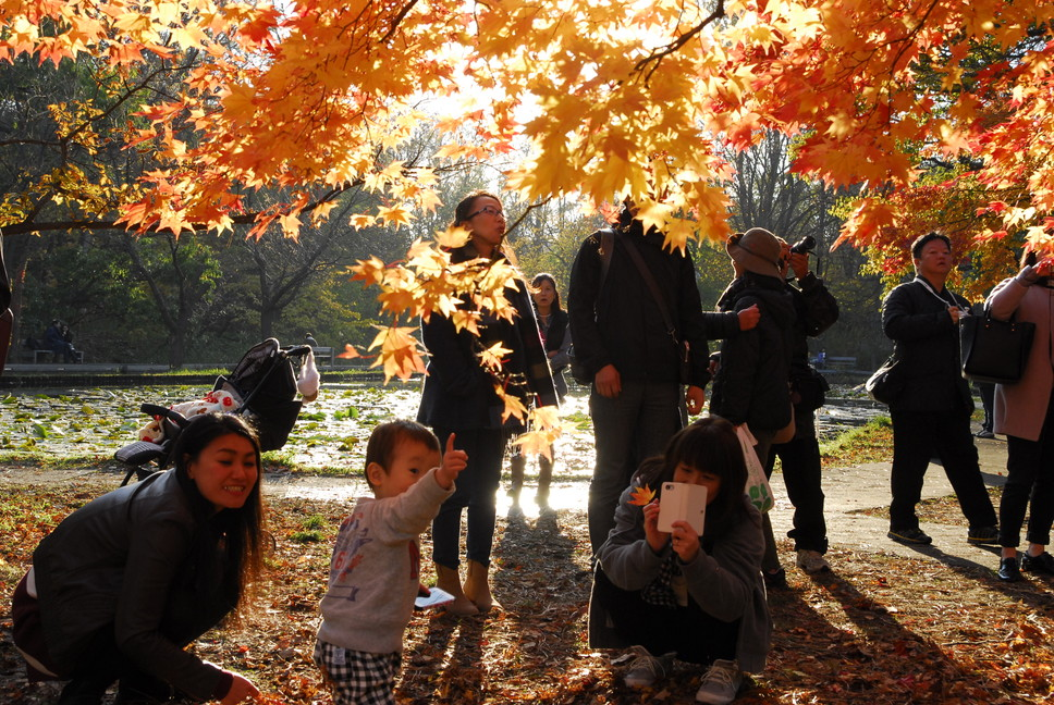 "2015年10月 『キャンパスの秋』 October 2015 ""Autumn in the Campus of Hokkaido University\""_c0219616_1830073.jpg"