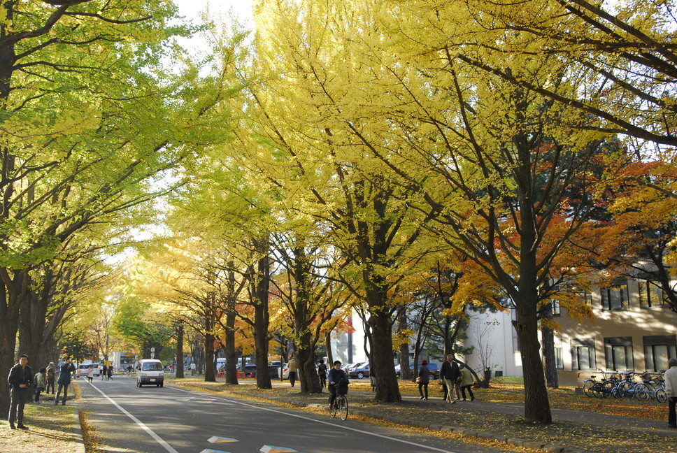 "2015年10月 『キャンパスの秋』 October 2015 ""Autumn in the Campus of Hokkaido University\""_c0219616_18322512.jpg"