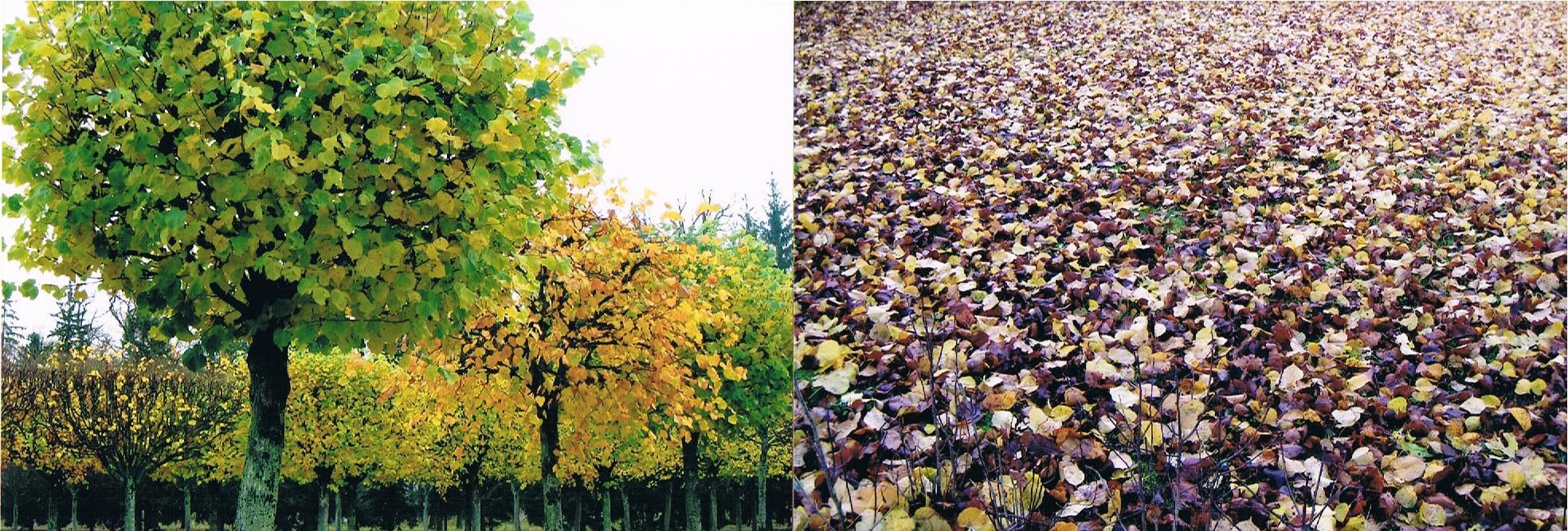 ロシアの「黄金の秋」_a0109837_19041209.jpeg