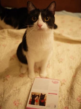 フェリシモまいにちにゃんこカレンダー2016猫 ぎゃぉすてぃぁらみるきぃ編。_a0143140_23565872.jpg