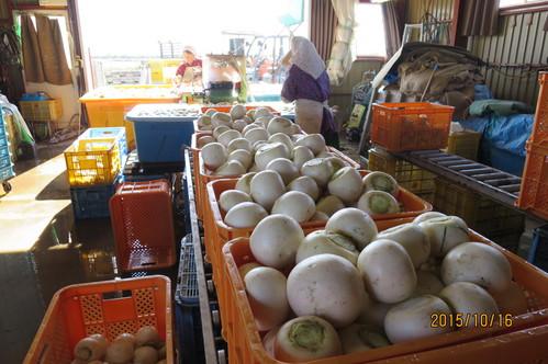 今年最後のかぶと大豆収穫_f0231042_19372225.jpg