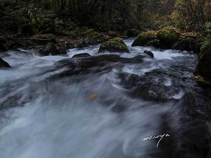 落葉の渓流_c0085877_07455342.jpg