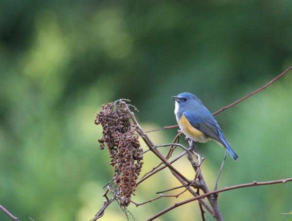 森の観察会 ~木の実・鳥~ 参加者募集中!!_f0212679_10244440.jpg