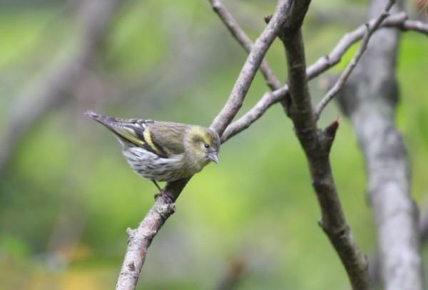 森の観察会 ~木の実・鳥~ 参加者募集中!!_f0212679_10253689.jpg