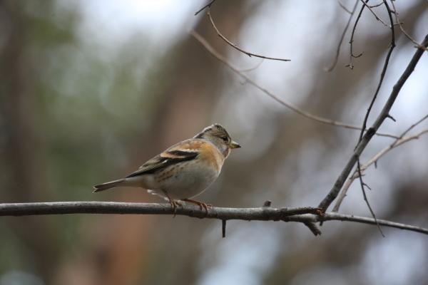 森の観察会 ~木の実・鳥~ 参加者募集中!!_f0212679_10255938.jpg