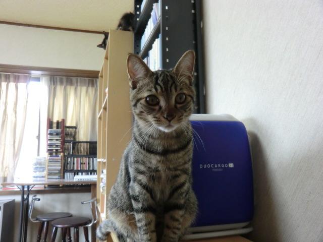 三春駒_e0351185_16365107.jpg