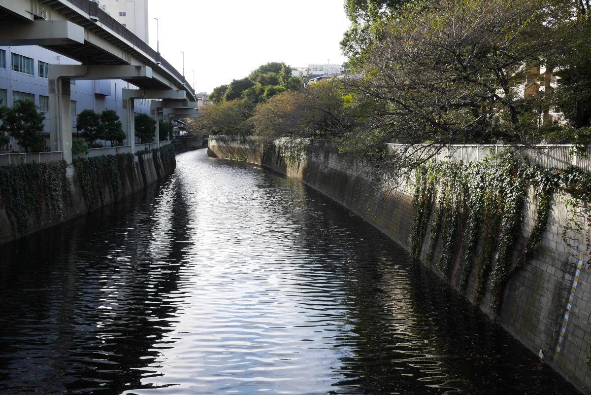 鳩山会館のバラ_c0252688_14154324.jpg