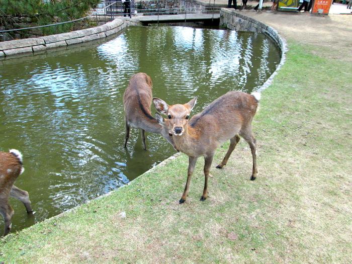 奈良の博物館と工場跡展_c0100195_7193739.jpg