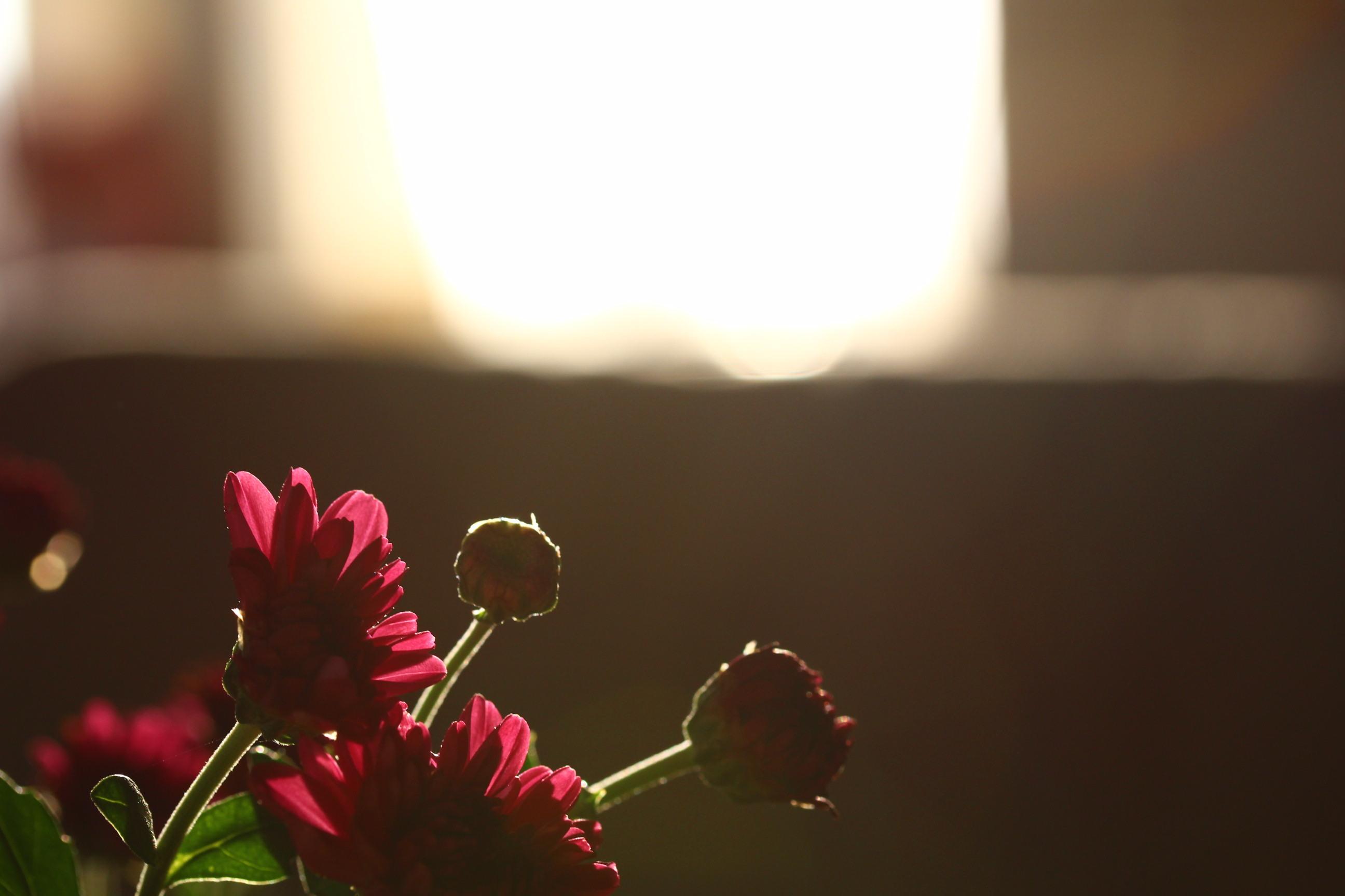 b0316503_11381057.jpg