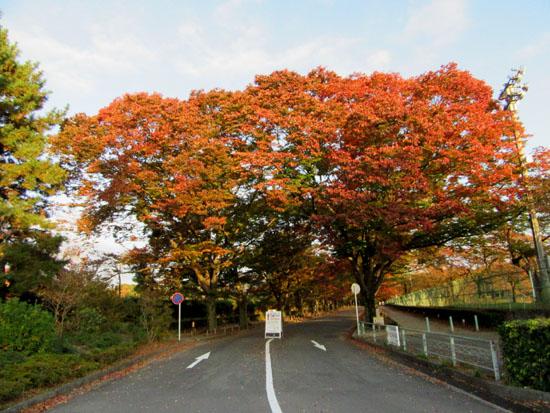 秋本番 植物園と鴨川_e0048413_18252519.jpg