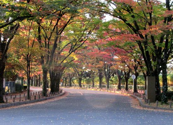 秋本番 植物園と鴨川_e0048413_18253542.jpg
