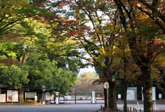 秋本番 植物園と鴨川_e0048413_18254645.jpg