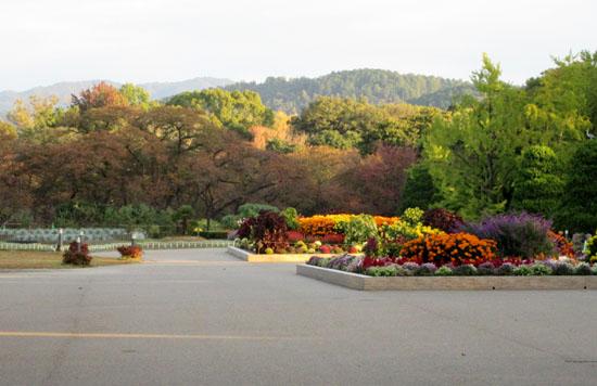 秋本番 植物園と鴨川_e0048413_1825571.jpg