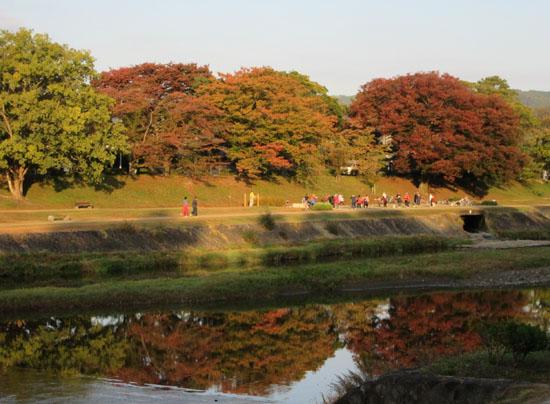 秋本番 植物園と鴨川_e0048413_18261640.jpg