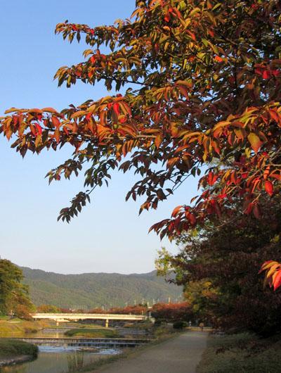 秋本番 植物園と鴨川_e0048413_18264216.jpg