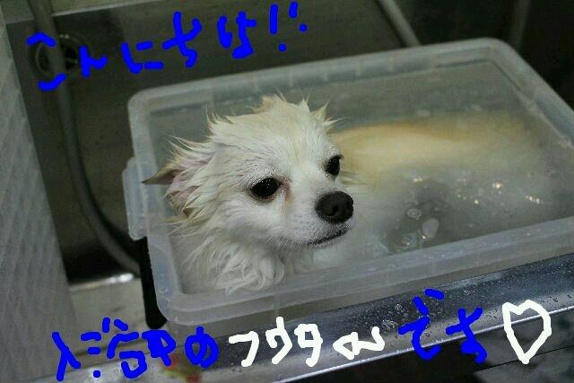 b0130018_08104067.jpg