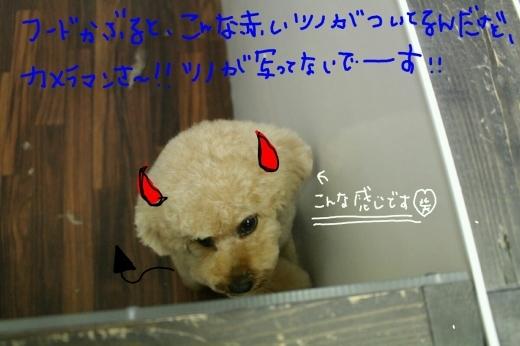 b0130018_08171232.jpg