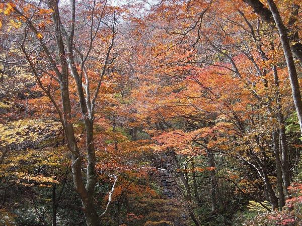 2015.10.24健康トレッキング(千年杉)_b0189727_1625358.jpg