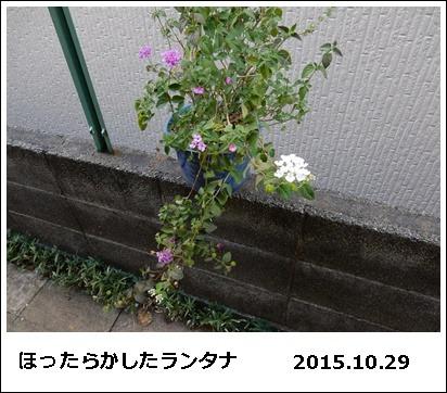 e0033229_18274432.jpg