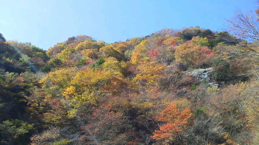10月29日、朝の気温−3℃。車道の紅葉に目を見張ります。_c0089831_2151383.jpg
