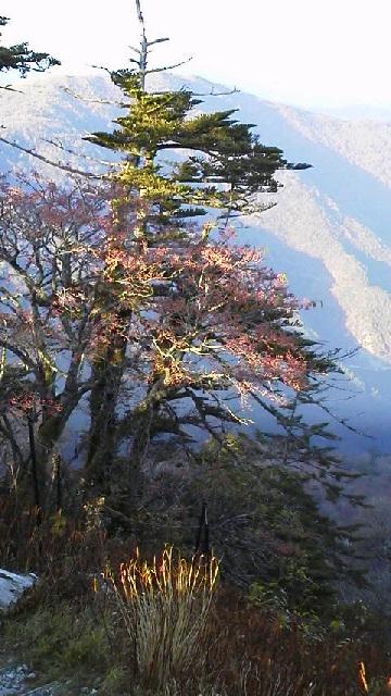 10月29日、朝の気温−3℃。車道の紅葉に目を見張ります。_c0089831_21513838.jpg