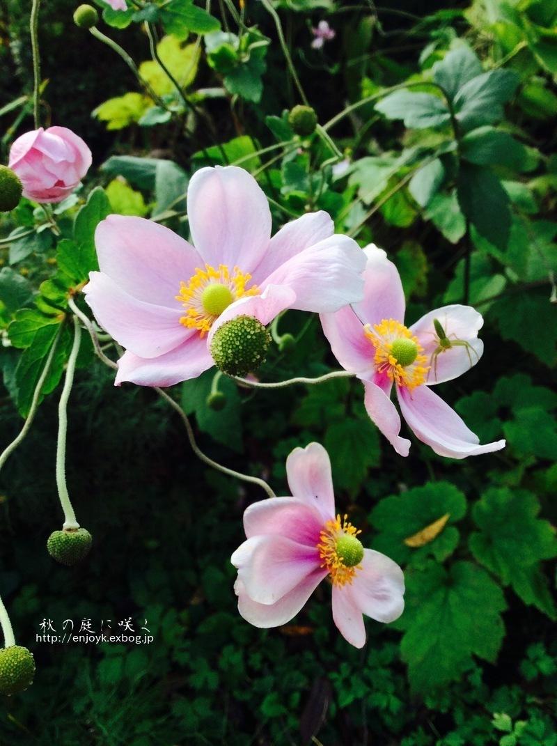 秋に咲く庭の花々_d0269832_07335667.jpeg