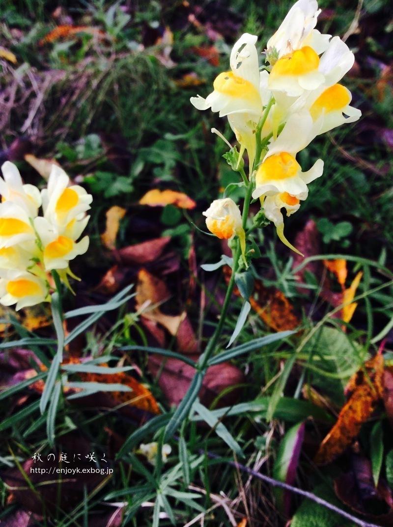 秋に咲く庭の花々_d0269832_07340510.jpeg