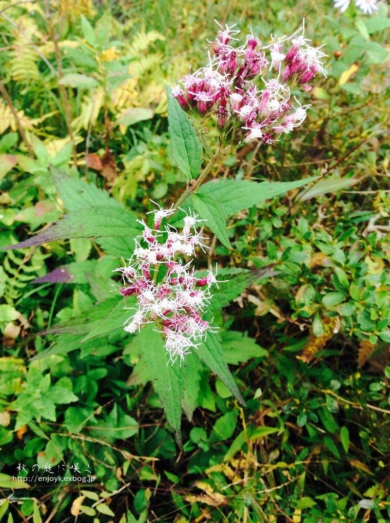 秋に咲く庭の花々_d0269832_07341553.jpeg