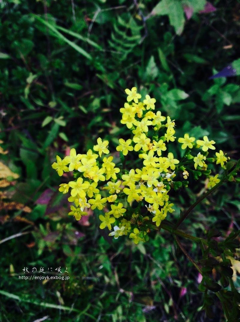 秋に咲く庭の花々_d0269832_07342476.jpeg