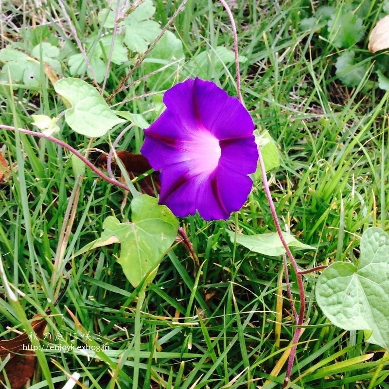 秋に咲く庭の花々_d0269832_07343830.jpeg