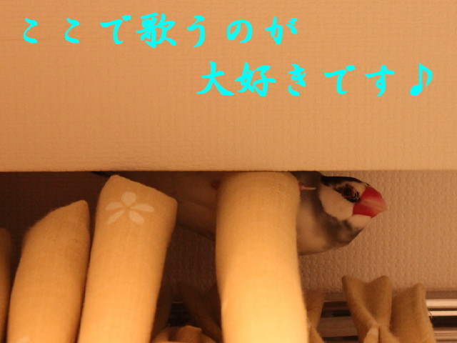 c0365734_17123196.jpg