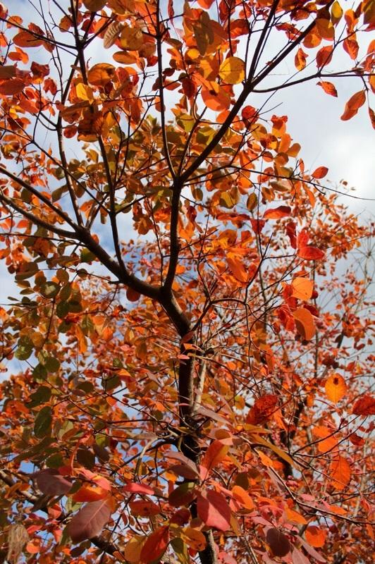 秋の彩り_b0132338_09221123.jpg