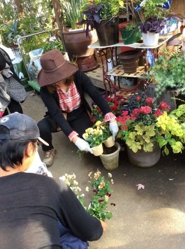 ビオラが繋いでくれた「濃厚プレミアム関東花の旅」_b0137969_05001562.jpg