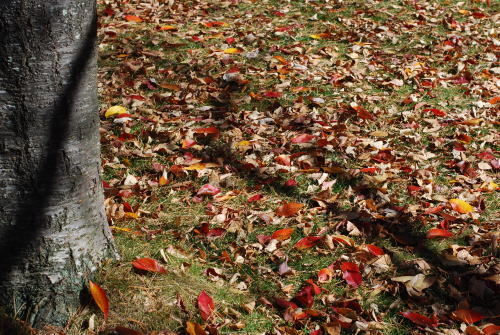 秋色の八ヶ岳_d0091671_824012.jpg