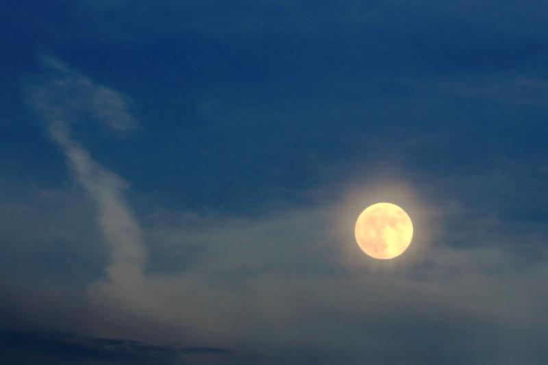 月と兎と亀_f0075075_2121374.jpg