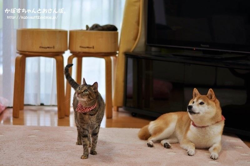 つーちゃんの魅力_a0126590_00260727.jpg