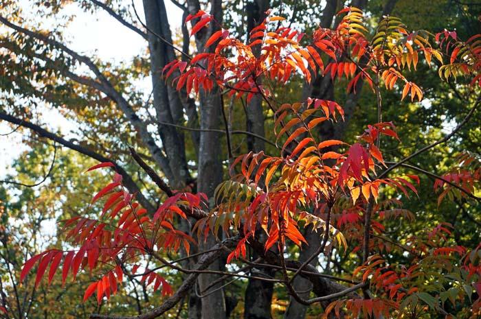秋の万博公園_e0016894_1985820.jpg