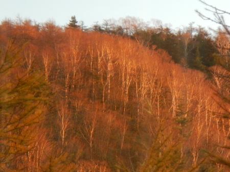 サンセットの綺麗な季節_e0120896_07474188.jpg