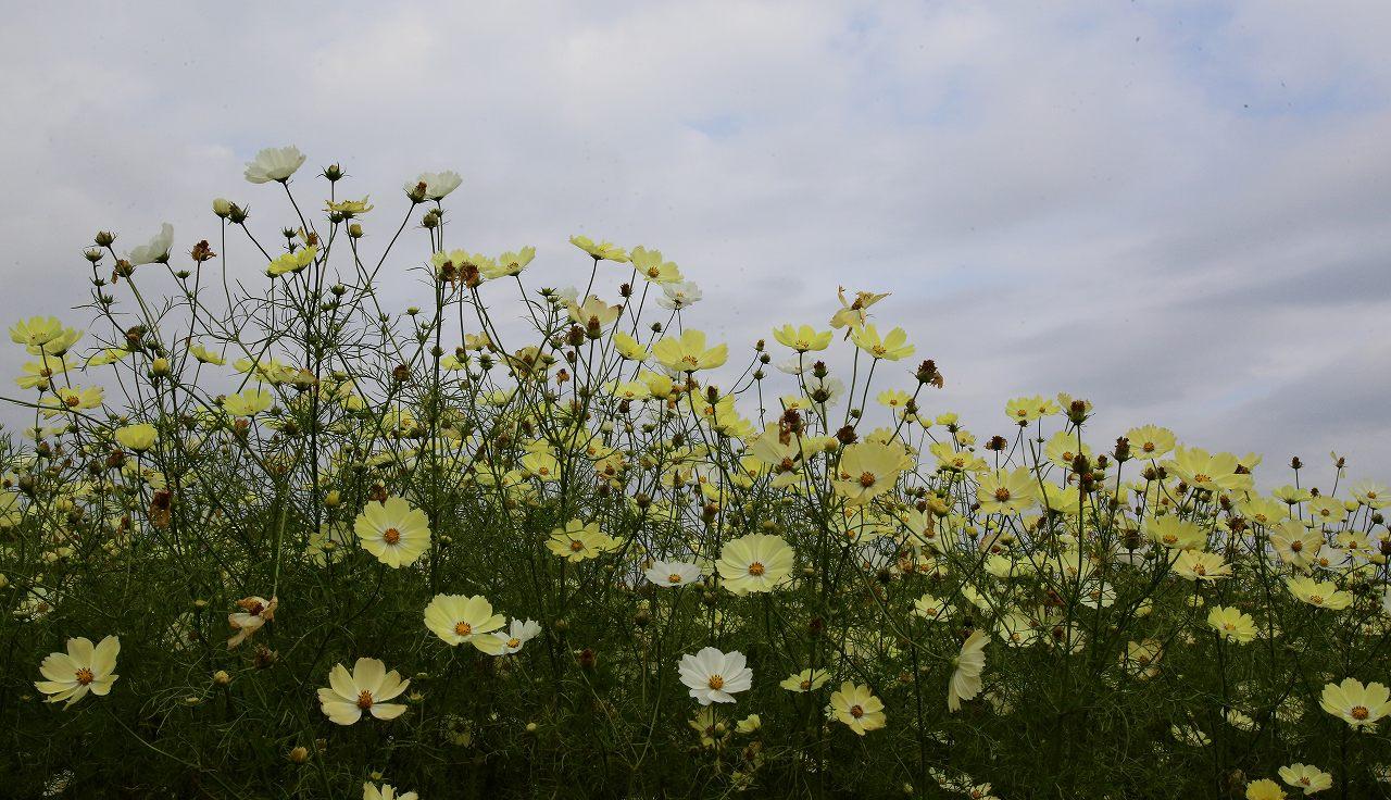 昭和記念公園にて_f0296999_1733096.jpg