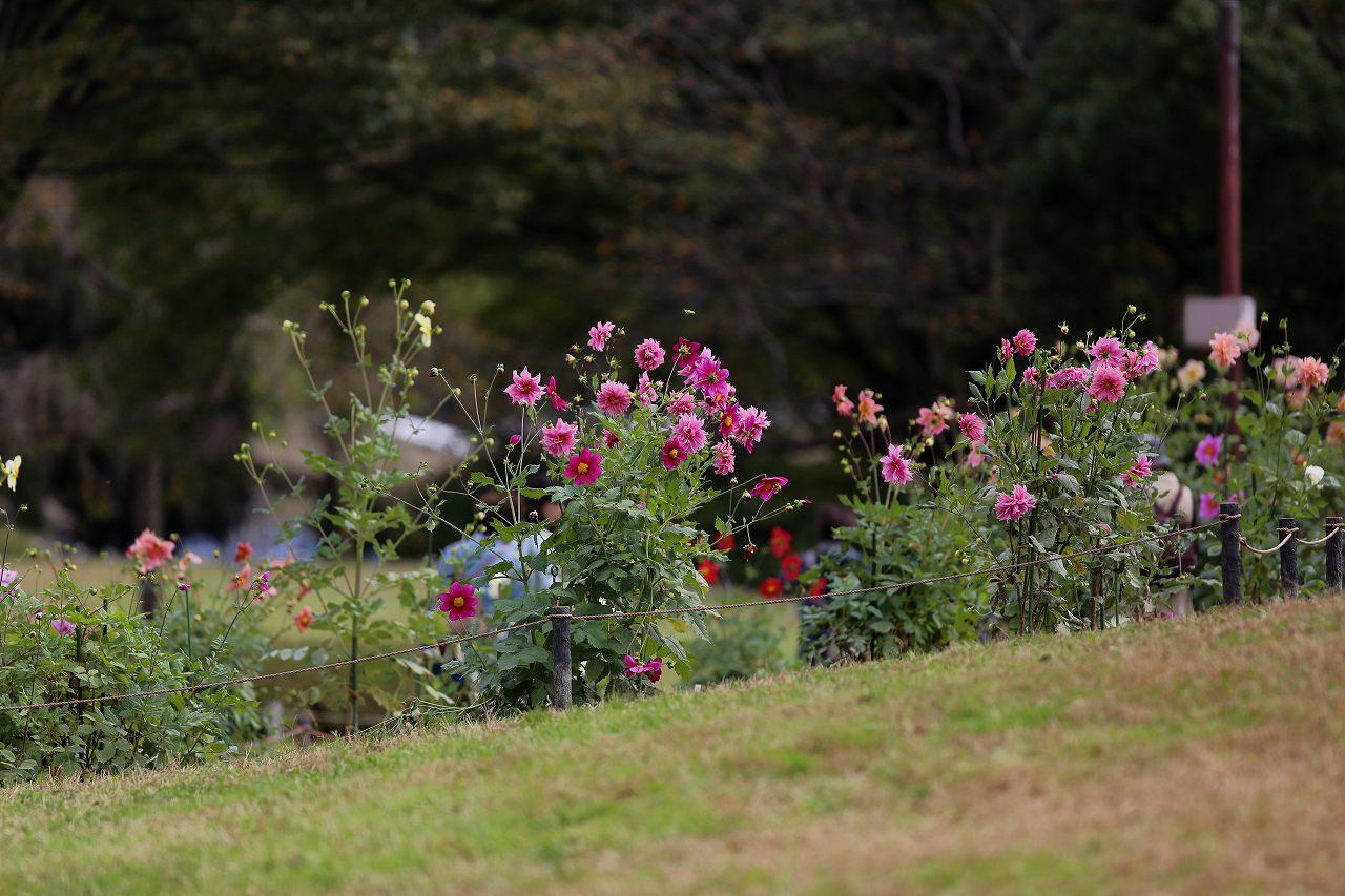 昭和記念公園にて_f0296999_1733404.jpg