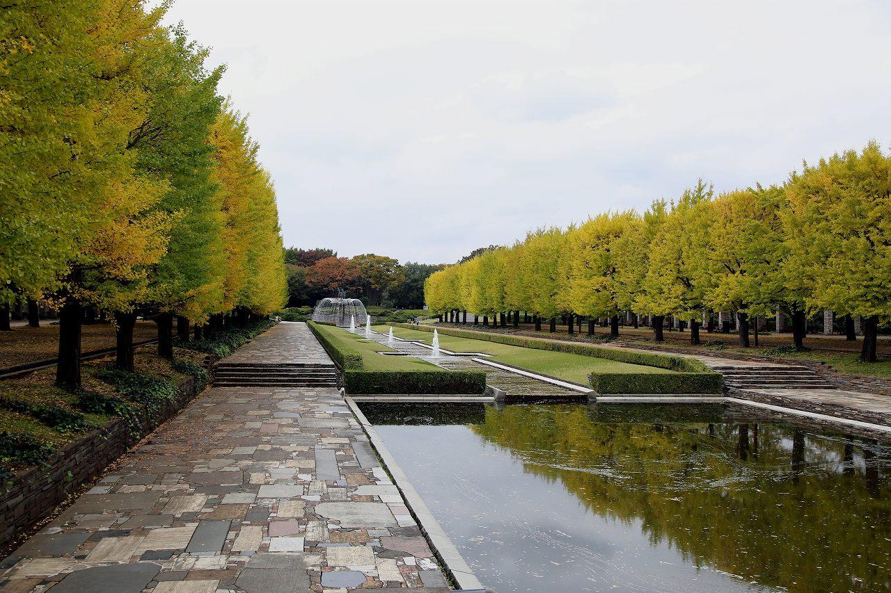 昭和記念公園にて_f0296999_17352058.jpg