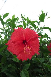 心に沖縄を持つわ・た・し。_d0046025_23251780.jpg