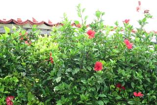 心に沖縄を持つわ・た・し。_d0046025_23283026.jpg