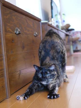 猫のお留守番 ワサビちゃん天ちゃんう京くん編。_a0143140_22163010.jpg