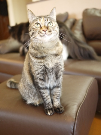 猫のお留守番 ワサビちゃん天ちゃんう京くん編。_a0143140_2217841.jpg