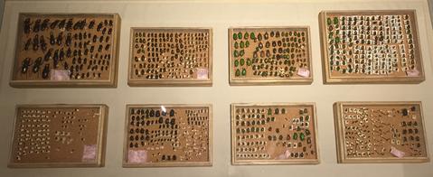 コラムリレー(第55回) 昆虫標本_f0228071_6324627.jpg