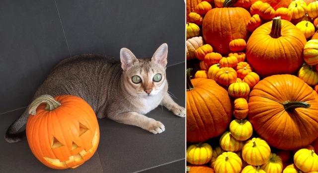 愛猫ディアモン君とハロウィンをエンジョイ♪_a0138976_16173818.jpg
