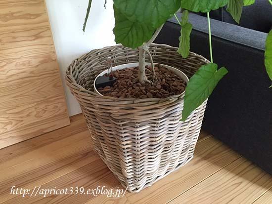 ウンベラータの鉢カバー_c0293787_15082057.jpg